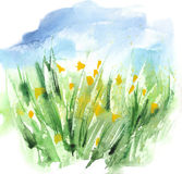 Watercolor Organic Eco Friendly Green Grass And Yellow Flowers Field With Blue Sky. Vector Background. Watercolor Organic Eco Friendly Green Grass And Yellow Stock Photography