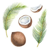 Watercolor organic set of coconut and palm trees isolated on white background. Stock Photography