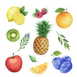 Watercolor organic set of fruits and herbs isolated on white background. Stock Photos