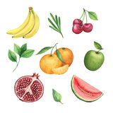 Watercolor organic set of fruits and herbs isolated on white background. Royalty Free Stock Photo