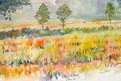 Watercolor original landscape painting  colorful of golden rice field Royalty Free Stock Photos