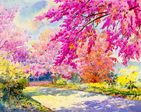 Watercolor original landscape painting pink color of  Wild himalayan cherry Royalty Free Stock Images
