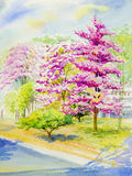Watercolor original landscape painting pink color of wild himalayan cherry Stock Photo