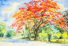 Watercolor original landscape painting red, orange color of peacock  flowers tree Royalty Free Stock Photos