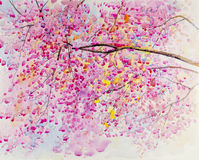 Watercolor original landscape painting red,pink color of Wild Himalayan Cherry  flower Stock Photos