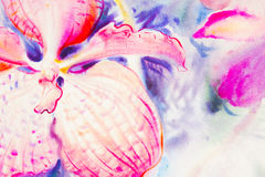 Watercolor original painting purple,pink color of orchid flower Stock Photos
