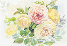 Watercolor original painting realistic  of roses flowers. Watercolor  original painting Realistic yellow,pink color of roses flowers and green leaves in abstract Stock Image