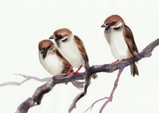 Sparrows. Watercolor original painting of sparrows on a branch. Asian style Stock Images