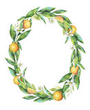 Watercolor oval frame fruit orange branch isolated on white background. Stock Images