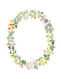 Watercolor oval wreath with meadow plants. Stock Images