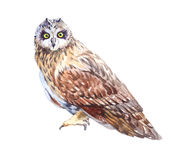 Watercolor owl bird screaming isolated Stock Photography