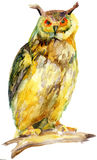 Watercolor owl on a branch Royalty Free Stock Photography