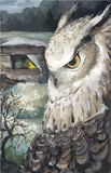 Watercolor Owl Nature Hand Drawn Illustration, vector Stock Images
