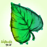 Watercolor Paint Of Cordate Leaf Stock Image