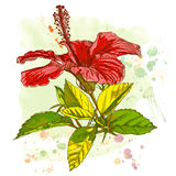 Watercolor paint - Hibiscus flower stock illustration