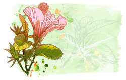 Watercolor paint - Hibiscus flower Royalty Free Stock Image