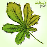 Watercolor Paint Of Palmate Leaf Royalty Free Stock Photo