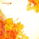 Watercolor painted autumn leaves vector background Stock Photo