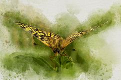 Watercolor painted beautiful butterfly. In sunny green garden stock illustration