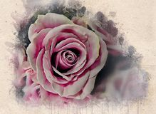 Watercolor painted beautiful pink roses. Watercolor painted beautiful romantic pink roses on old vintage paper royalty free stock photography