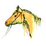 Watercolor painted chestnut horse head with equestrian sport bridle on white. Stock Photos