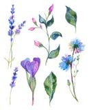 Watercolor flowers illustration Stock Photo
