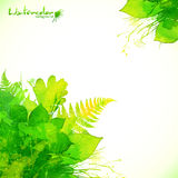 Watercolor painted green summer leaves background Royalty Free Stock Photos