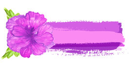 Watercolor painted    hibiscus. Tropical Flower. Vector banner with  flower. Royalty Free Stock Photography