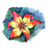 Watercolor painted illustration yellow orange red Lily Stock Photography