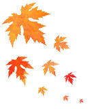 Watercolor painted orange leaves fall Royalty Free Stock Photos