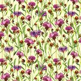 Watercolor painted purple wild thistle flowers on a yellow background. Blossom meadow plant. Hand drawn botanical illustration. Se Royalty Free Stock Photos