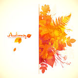 Watercolor painted red autumn foliage banner Royalty Free Stock Image