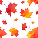 Watercolor painted red autumn maple leaves pattern Stock Image