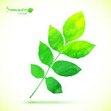 Watercolor painted vector green leaf Stock Photos