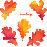 Watercolor painted vector oak leaves Stock Images