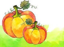 Watercolor painted vector orange pumpkins Stock Photography