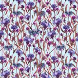 Watercolor painted violet wild thistle flowers on a blue background. Blossom meadow plant. Hand drawn botanical illustration. Seam Royalty Free Stock Photos