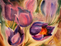 Watercolor painting. Of the beautiful spring flowers Stock Photography