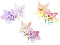 Watercolor painting with abstract flowers Aquilegia Stock Images