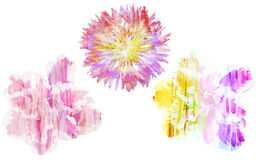 Watercolor painting with abstract flowers cornflower and azaleas Stock Images