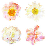 Watercolor painting with abstract flowers rose hips, chamomile. Peony, azalea, isolated on white background royalty free illustration