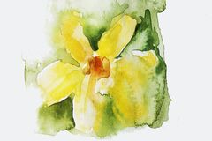 Watercolor yellow flower, green background stock illustration