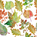 Watercolor painting. Autumn leaves Royalty Free Stock Photos