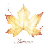 Watercolor painting of Autumn with maple leaves drawing Royalty Free Stock Photos