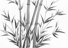 Watercolor painting of bamboo Royalty Free Stock Image
