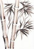 Watercolor painting of bamboo Royalty Free Stock Images