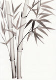 Watercolor painting of bamboo Stock Photos