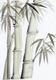 Watercolor painting of bamboo Stock Photography