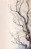 Watercolor painting. Bare branches of an old tree Stock Images