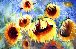 Watercolor painting of beautiful sunflowers.  Stock Photography
